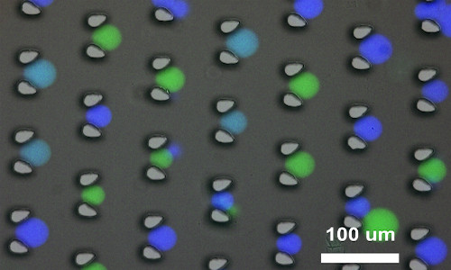 Microscopic image of synthetic protocells used for DNA communication and computing.